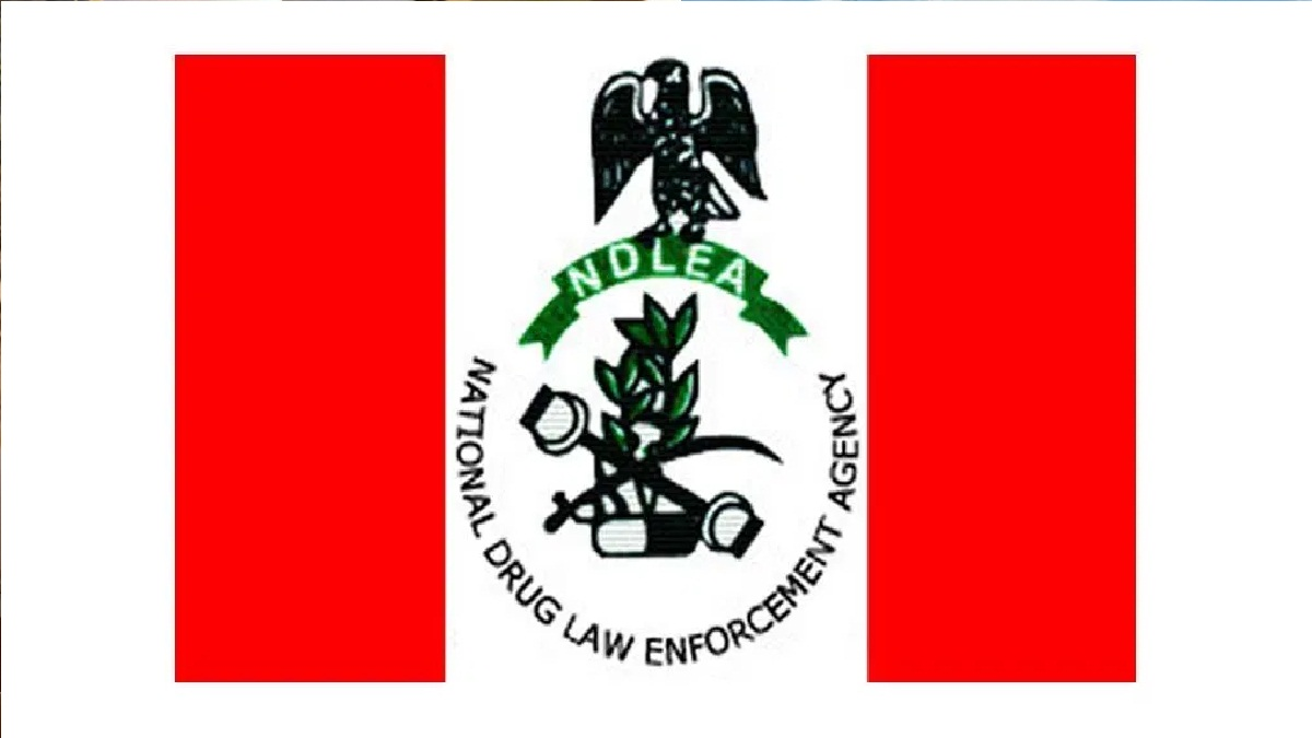 Kano elections: NDLEA screens 250 candidates, Over drug abuse symptoms