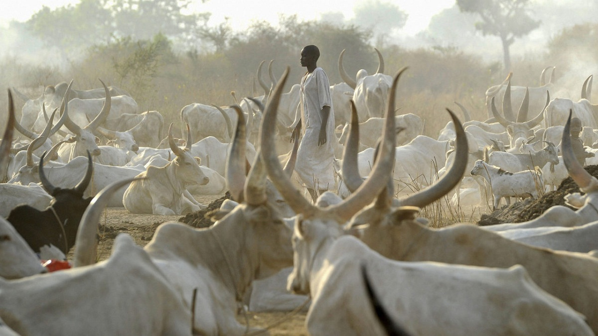 Scarcity Of Beef, Tomatoes Loom In Southern Nigeria As Cattle breeders demand N475b compensation