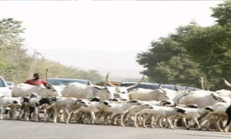 Herdsmen Avoid Open Grazing Ban, Obstruct Traffic