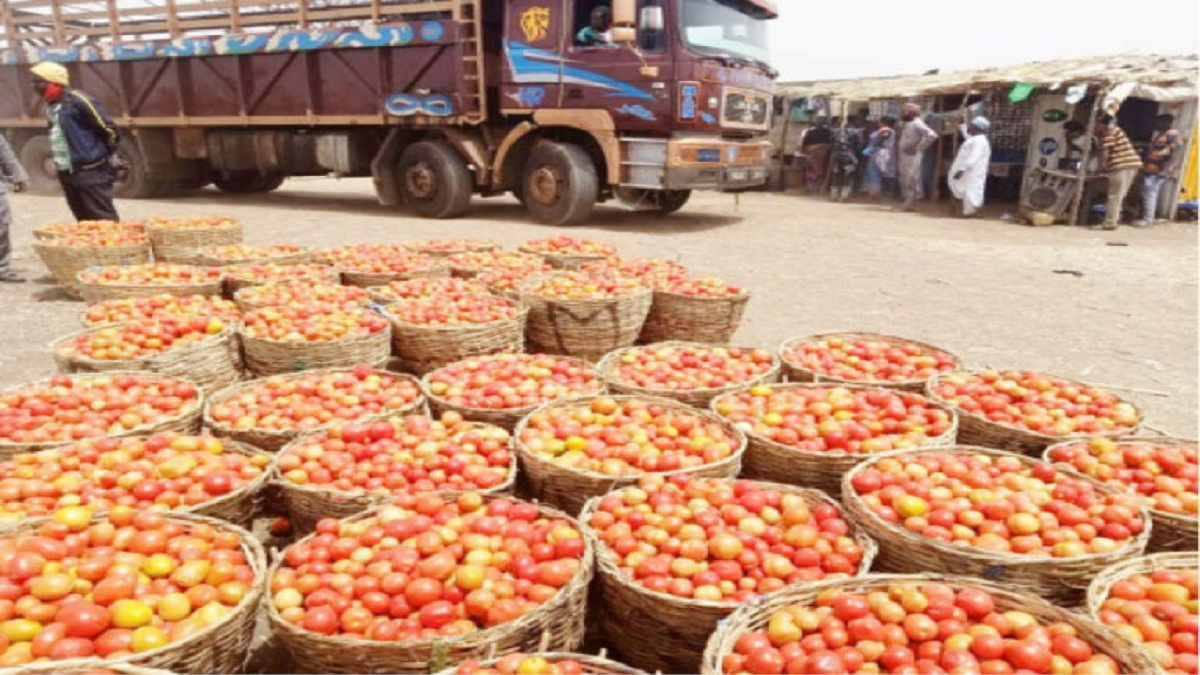 Blockade Persists As Kano Tomato, Onion Farmers, Marketers Lose Big