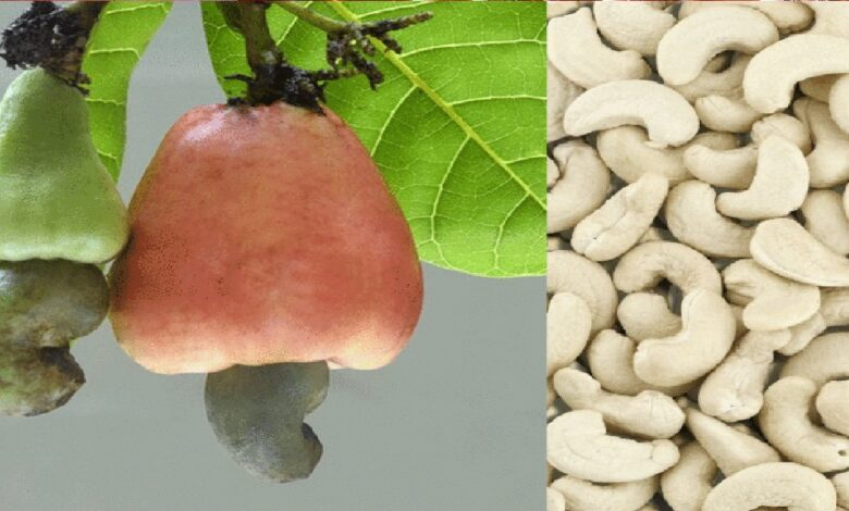 Cashew Nut Reduces High Blood Pressure, Says Expert