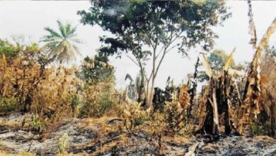 82yrs Ekiti farmers laments after fire razed his 54yrs farm