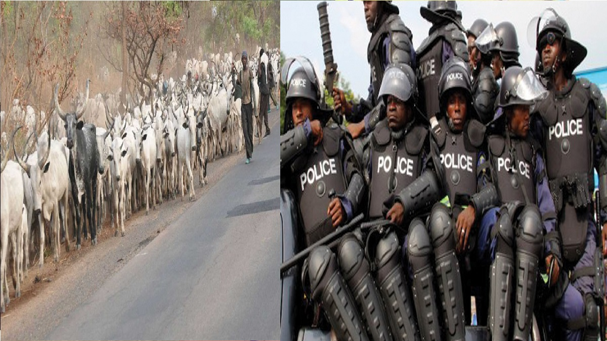 Nigeria police arrest 15 people for killing 706 cows