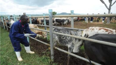 LIST: FG Shortlists 21 States For Pilot Grazing Reserves
