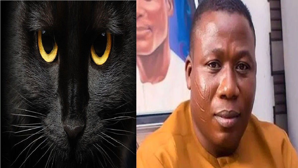 Soldiers Arrest Igboho's Cat, They Thought He Changed To Cat- Eyewitnesses
