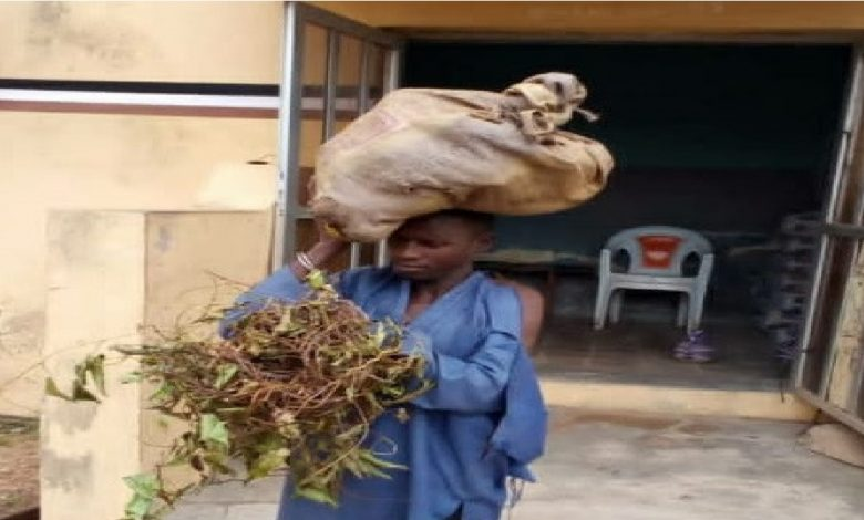 Court Sentenced A Man To 6 Months In Prison For Stealing Yam Tubers In Kwara